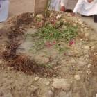 جموع المؤمنين على القبر الطاهر 2